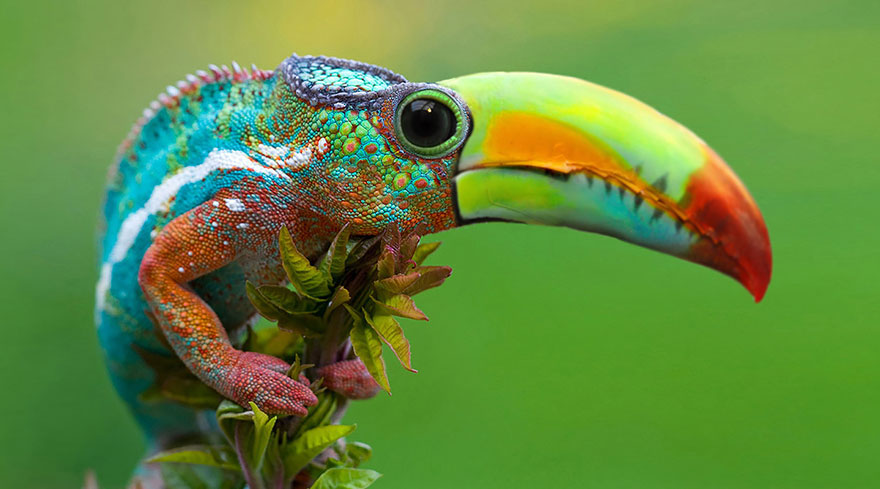 créatures-étranges-hybrides-crée-avec-photoshop copie