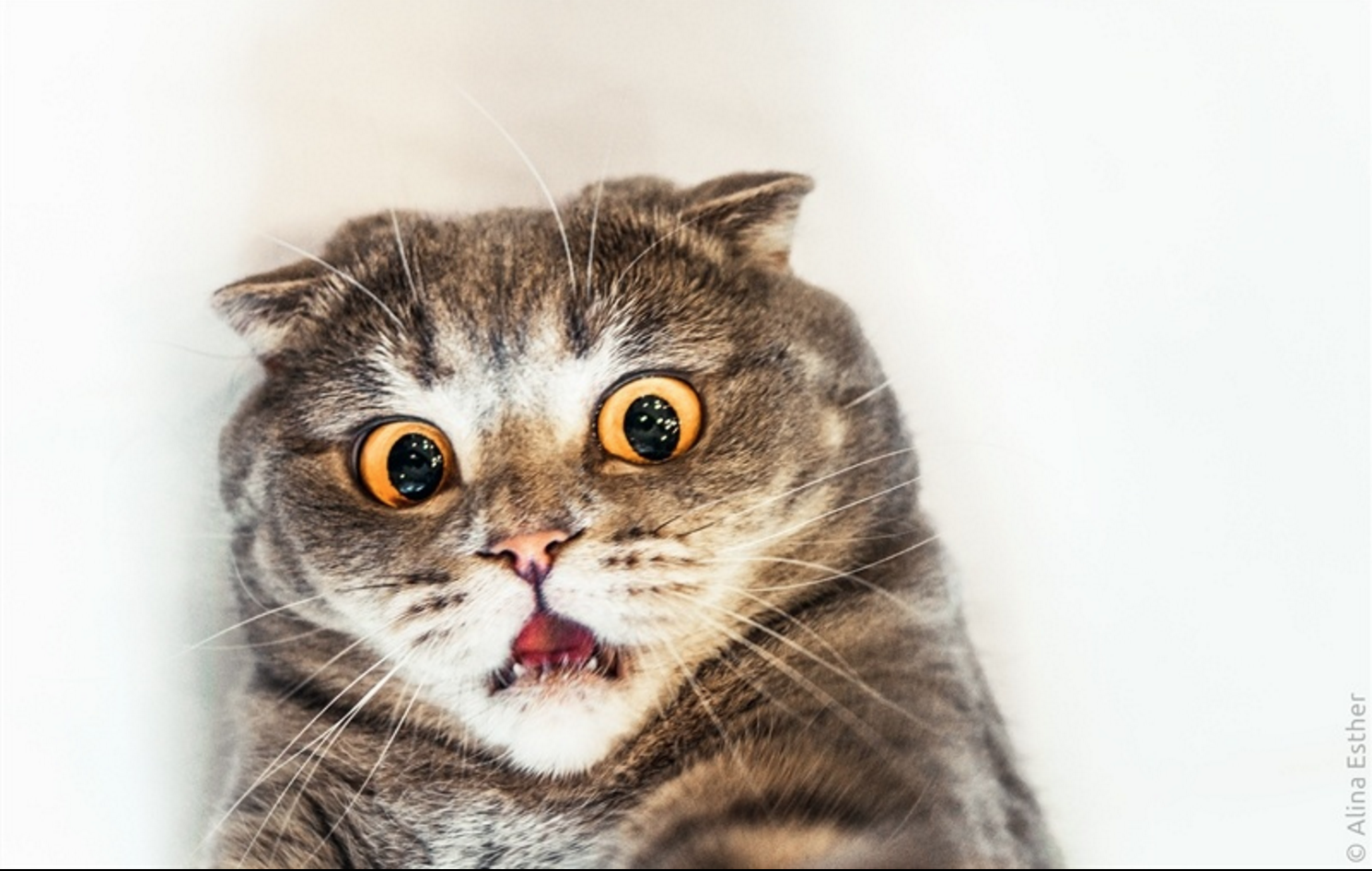 chat-pas-photogéniques-du-tout