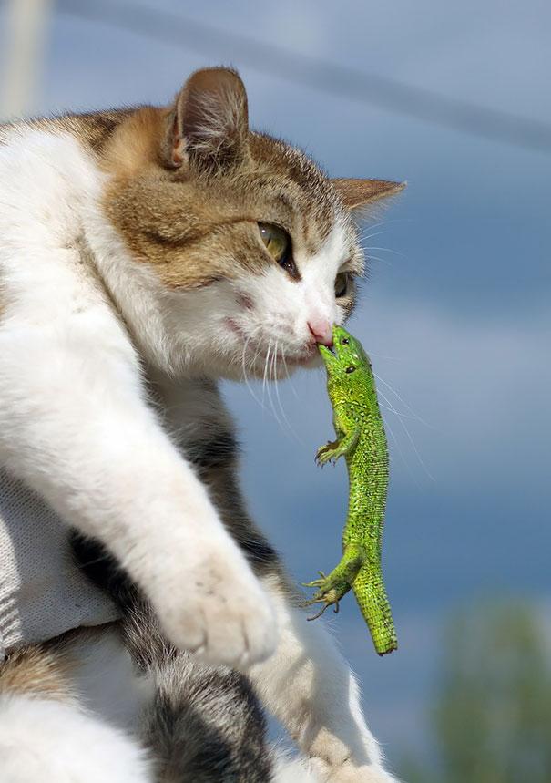 chats-situation-compliqué-regret