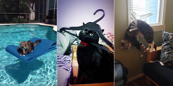 chats-qui-regrettent-ce-qu-ils-viennent-de-faire