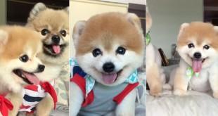 chien-sourit-trop-mignon-peluche