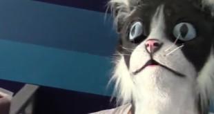 -il-terrifie-ses-chat-avec-un-masque-de-chat