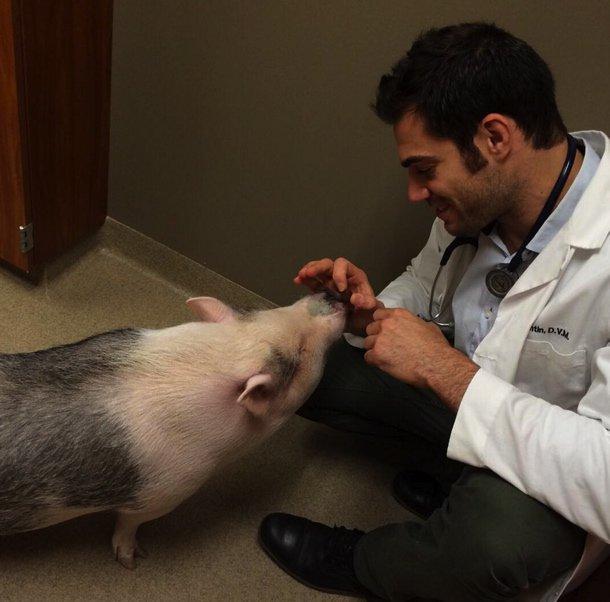 docteur-evan-instagram-beau-goss-animaux-exotiques-vétérinaires-sexy