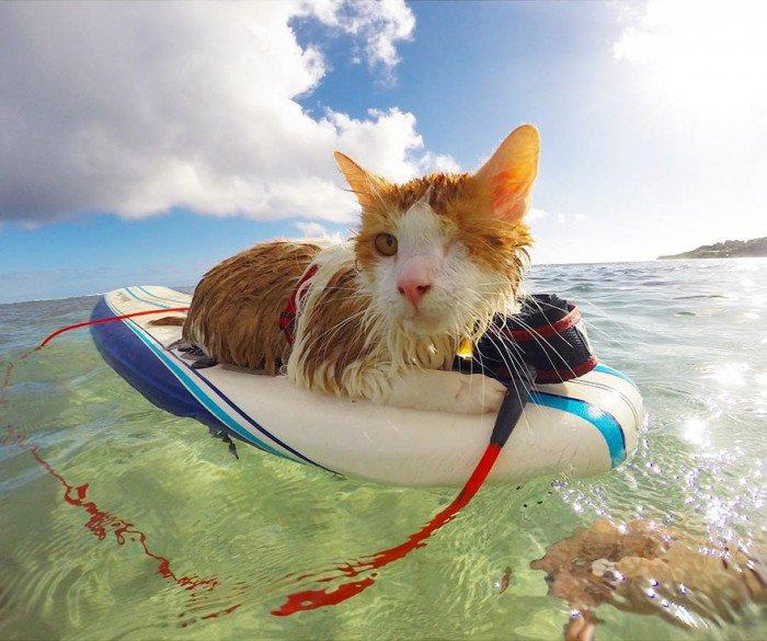 Kuti chat surf