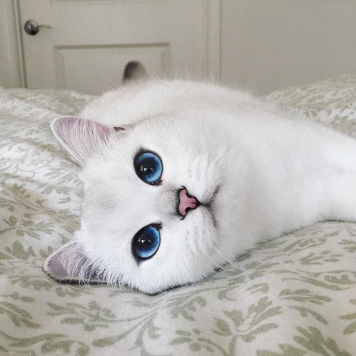 ce-chat-a-les-plus-beaux-yeux-toutes-compétitions-confondues copie
