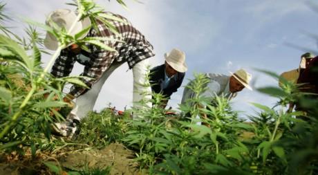 maroc-villes-incontournable-pour-les-fumeurs-de-cannabis