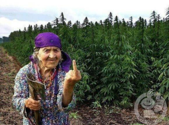 albanie-villes-incontournable-pour-les-fumeurs-de-cannabis