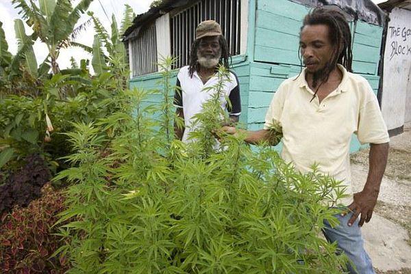 jamaique-villes-incontournable-pour-les-fumeurs-de-cannabis