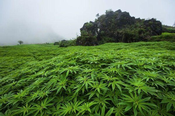 laos-villes-incontournable-pour-les-fumeurs-de-cannabis