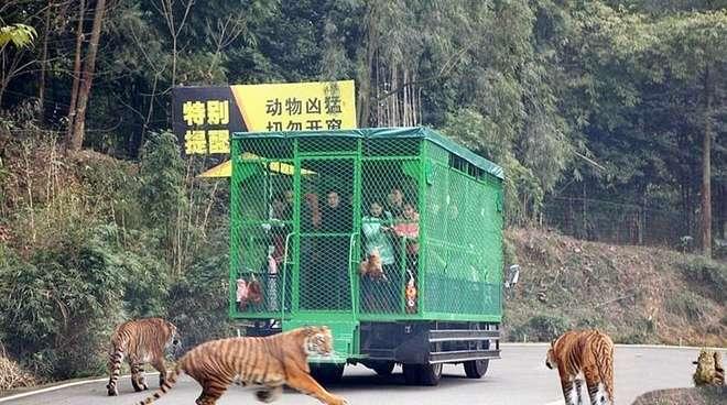 zoo-fauves-en-liberté-humains-en-cage copie