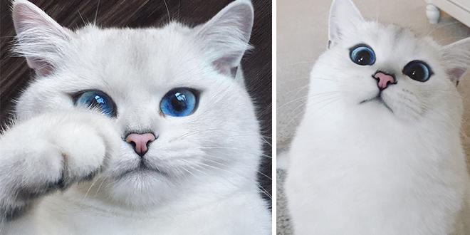 ce-chat-a-les-plus-beaux-yeux