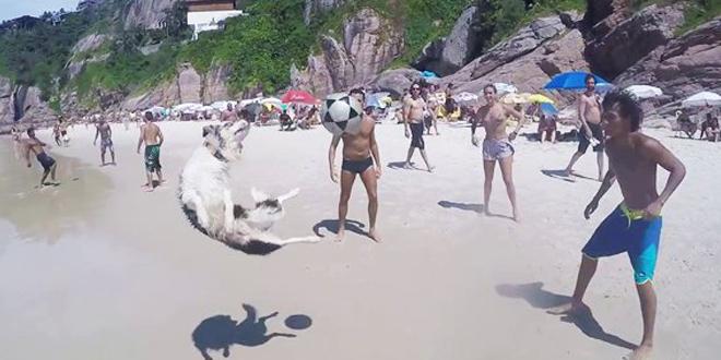 chien-foot-bresil-rio-technique
