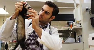 veterinaire-sexy-beau-gosse-web