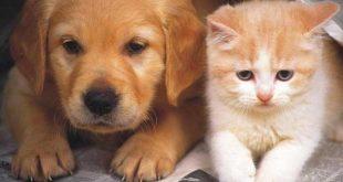 70-chats-et-chiens-retrouves-entasses-dans-une-cuisine