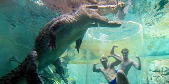 adrenaline-nager-avec-les-crocodiles