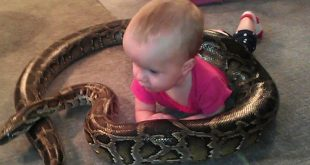 alyssa-bebe-serpent-amitie