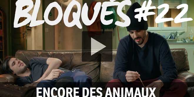 bloque-replay-episode-22-encore-des-animaux