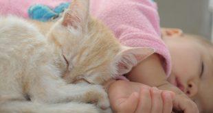 chat-et-bebe