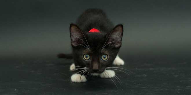 chat-noir-photos
