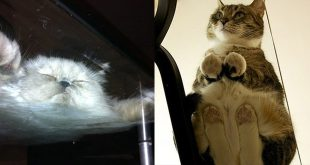chat-sous-table-verre-epic1