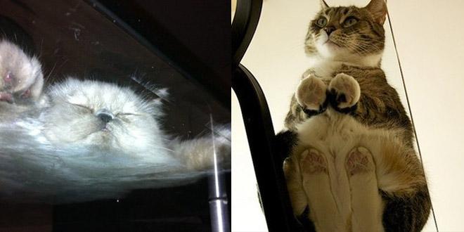 chat-sous-table-verre-epic1