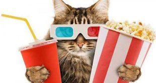 cinema-chats-great-kitten-londres