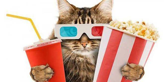 cinema-chats-great-kitten-londres