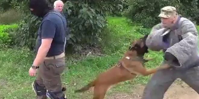 dressage-canin-israelien-brigade-canine-israelienne
