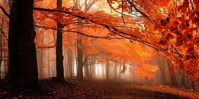 foret-automne-republique-tcheque