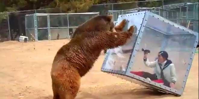 grizzly-ayako-imoto