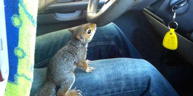 il-decouvre-un-nid-decureuils-dans-sa-voiture-neuve