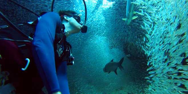 il-nage-au-milieu-des-poissons