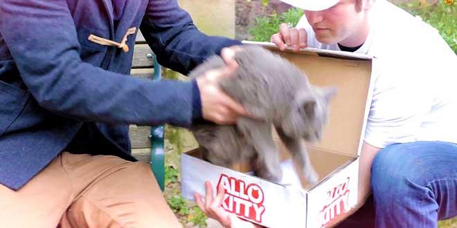 lappli-allo-kitty-vous-permet-de-commander-un-chat-a-domicile