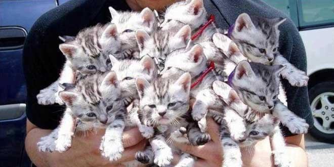 plus-de-100-chats-retrouves-dans-une-maison