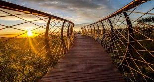 the-boomslang-pont