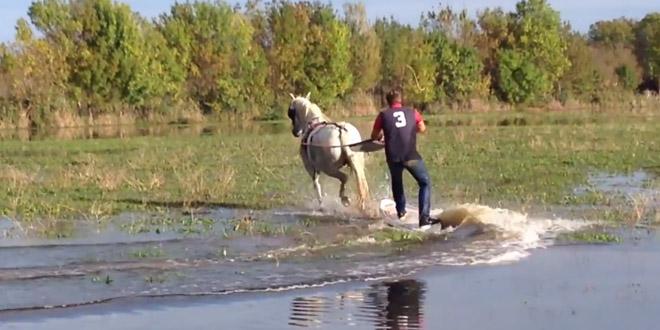 tracter-par-un-cheval-wakeboard