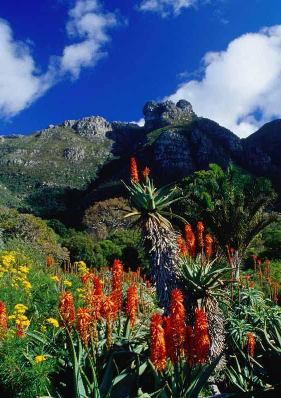 jardin-botanique-national-kirstenbosch-afrique-du-sud-plus-beaux-jardin-du-monde