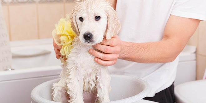 toilette-et-hygiene-de-chien