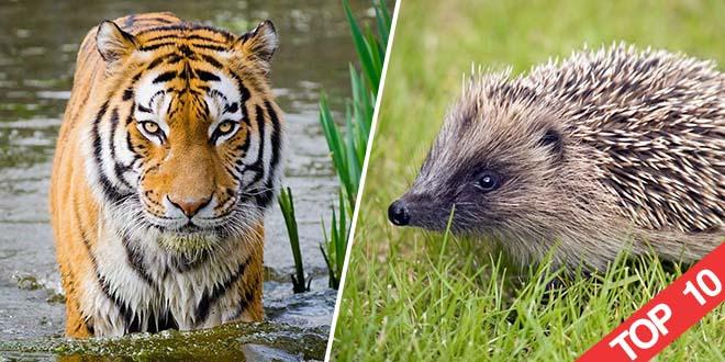 top-10-animaux-de-compagnie-les-plus-insolites