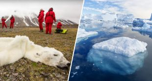 Un-ours-polaire-a-l-agonie-devient-le-symbole-de-la-lutte-contre-le-rechauffement-climatique