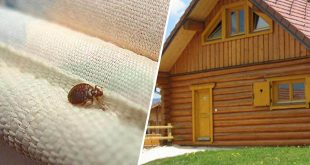 eliminer-les-parasites-au-quotidien-maison