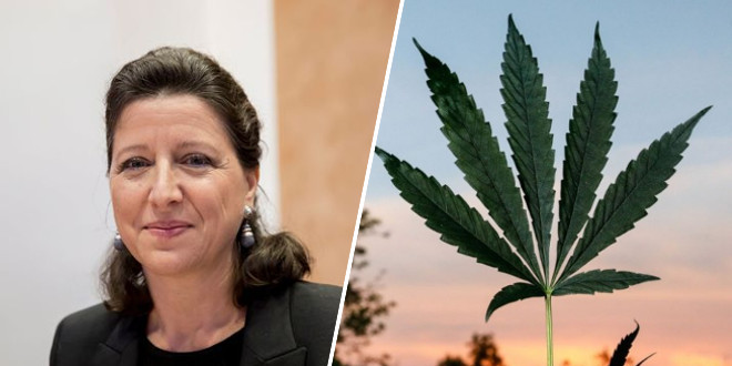 le-cannabis-a-usage-medical-bientot-une-realite-en-france