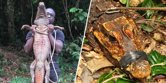 decouverte-de-crocodiles-orange-coinces-depuis-3-000-ans-dans-une-grotte