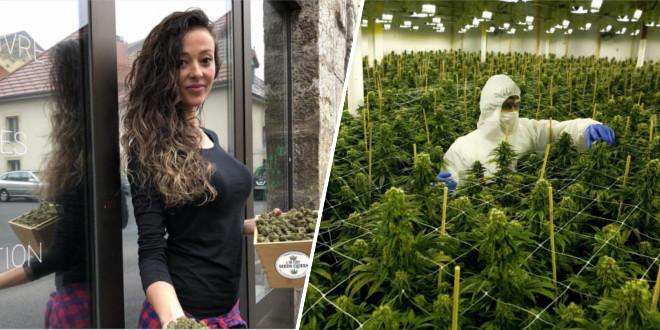 legaux-les-premiers-business-lies-au-cannabis-ouvrent-en-france