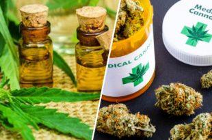 cannabis-therapeutique-la-france-sur-le-point-de-se-laisser-tenter