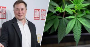 elon-musk-il-va-envoyer-du-cannabis-dans-l-espace