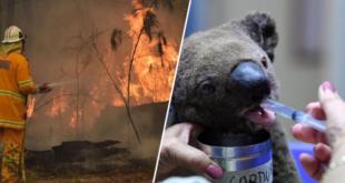 australie-un-demi-milliard-d-animaux-ont-deja-disparuaustralie-un-demi-milliard-d-animaux-ont-deja-disparu