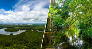 perdus-ils-survivent-un-mois-en-foret-amazonienne