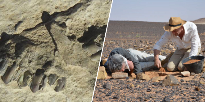 des-traces-humaines-de-120-000-ans-decouvertes-en-arabie
