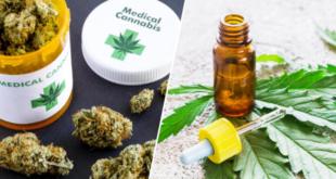 cannabis-lancement-du-test-en-france-pour-24-mois
